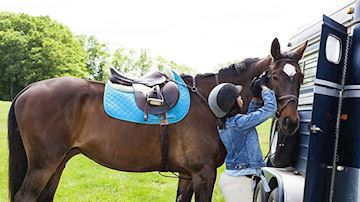 Brown horse with white marking on brow wearing light blue numna under saddle being unbridled by rider next to horsebox