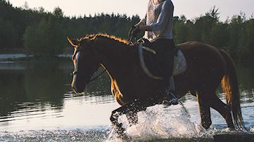 Horse walking through lake