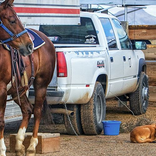 Horse stood in front of a trailer with dogs lying near its feet