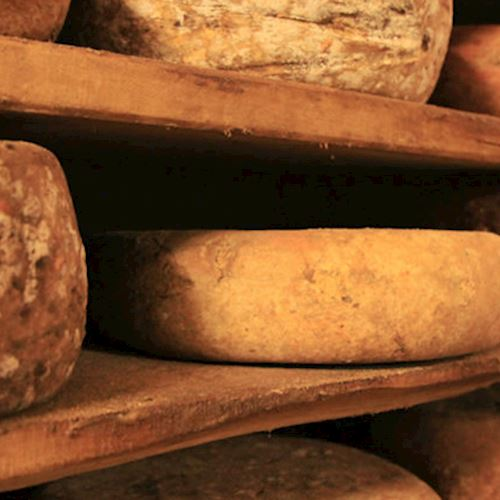 cheeses-banner
