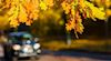 Autumn motoring