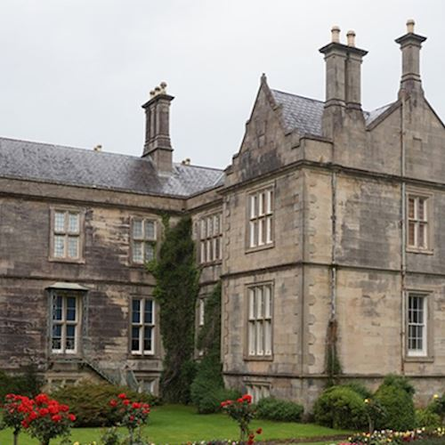 Grey stone large stately home with ivy growing on one side and rose bush in foreground