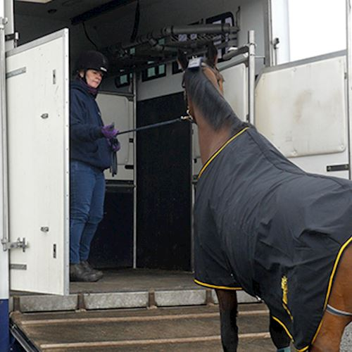 Brown horse wearing NFU Mutual branded cover being led into silver and blue long wheel-based horsebox